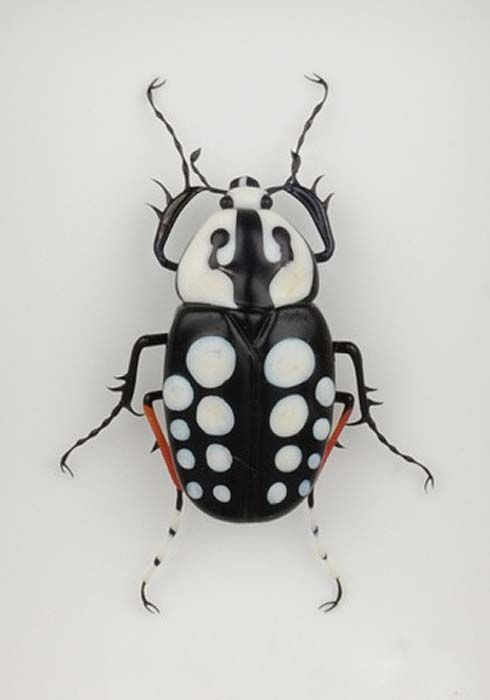 White dotted beetle by Emanuel Toffolo