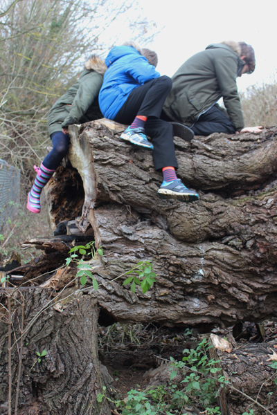 Children climbing on fallen tree
