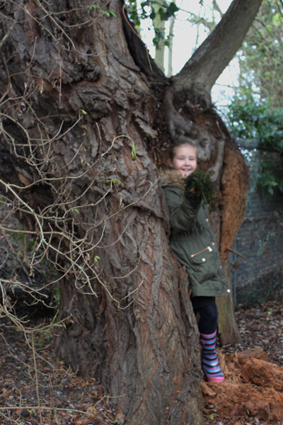 Girl climbing inside a tree