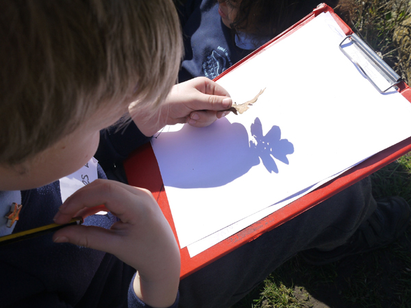 Looking at the shadow of a leaf