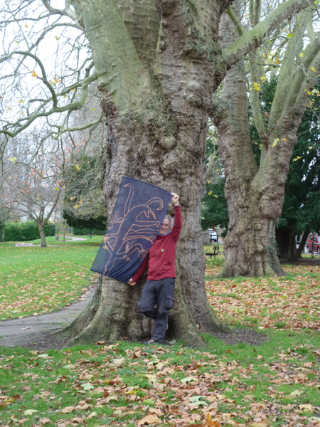London Planes of Alexandra Gardens
