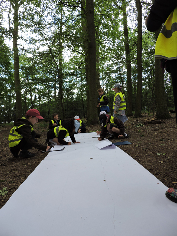 Group drawing in aunties woods 2