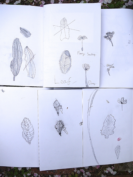 Leaf studies by Evan, Emma, Tiarna, Leo, Joe, Raphael