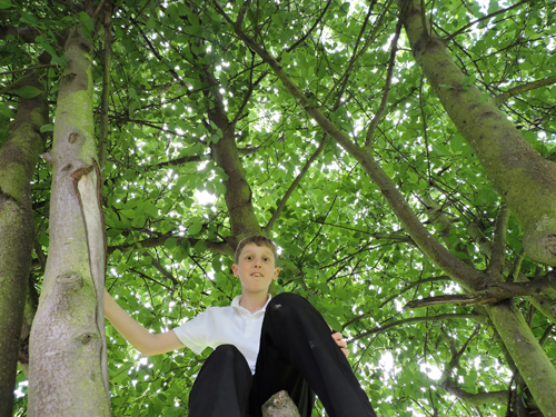 Looking up at a boy in a tree